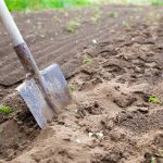 poor soil